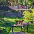 Сафари-парк Туари