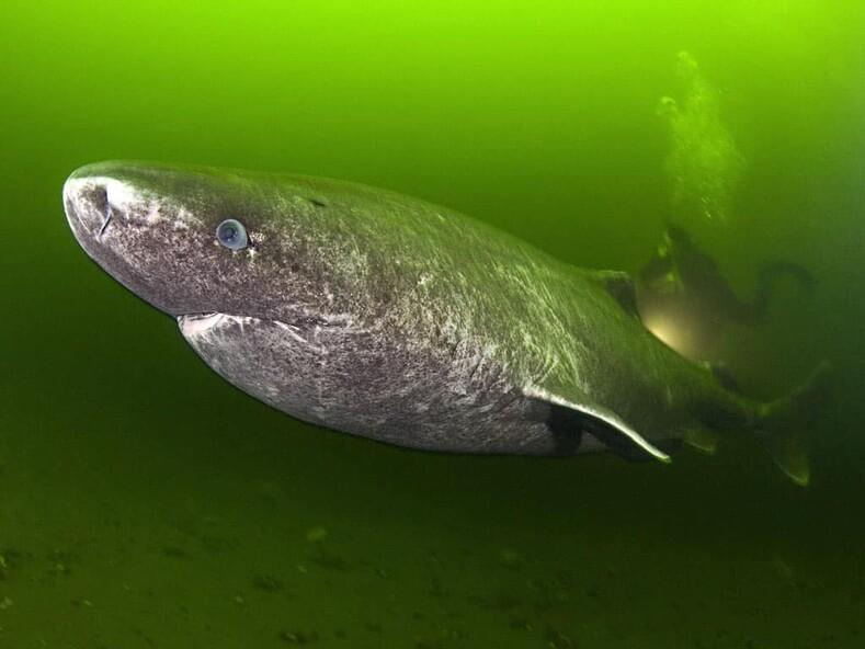 Самое старое животное Земли, прожившее 507 лет, было убито оплошностью учёных