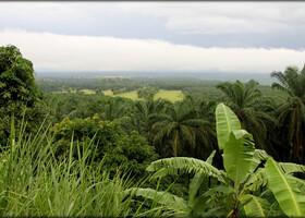 Гора Камерун или моя самая проблемная фотосъёмка