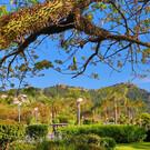 Сады Алании