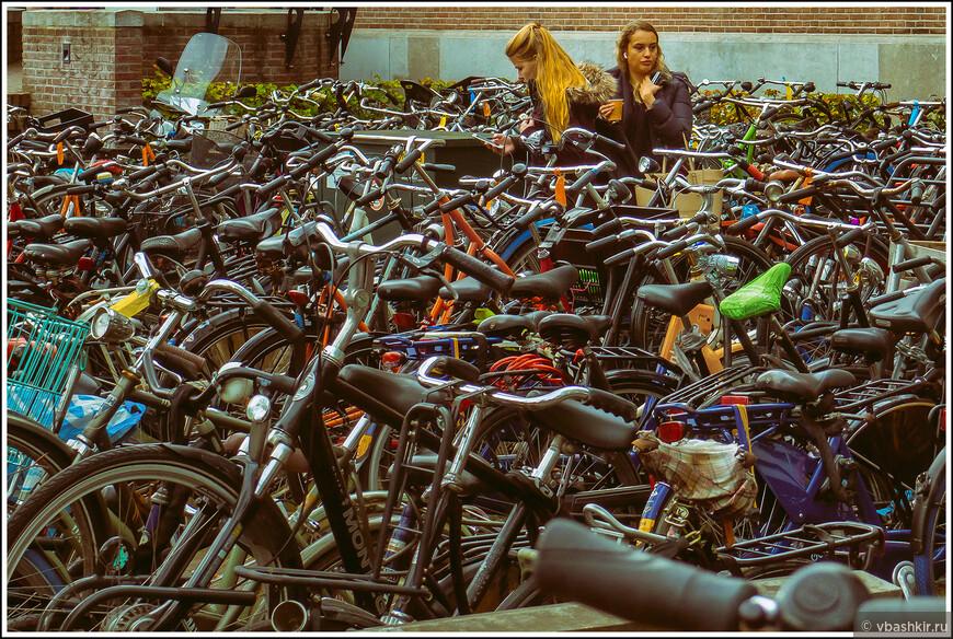 Лейден. Велосипедные студентки.