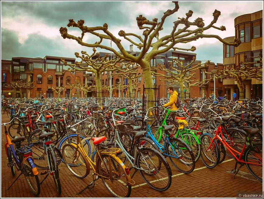 Лейден. Велосипедье под деревом.