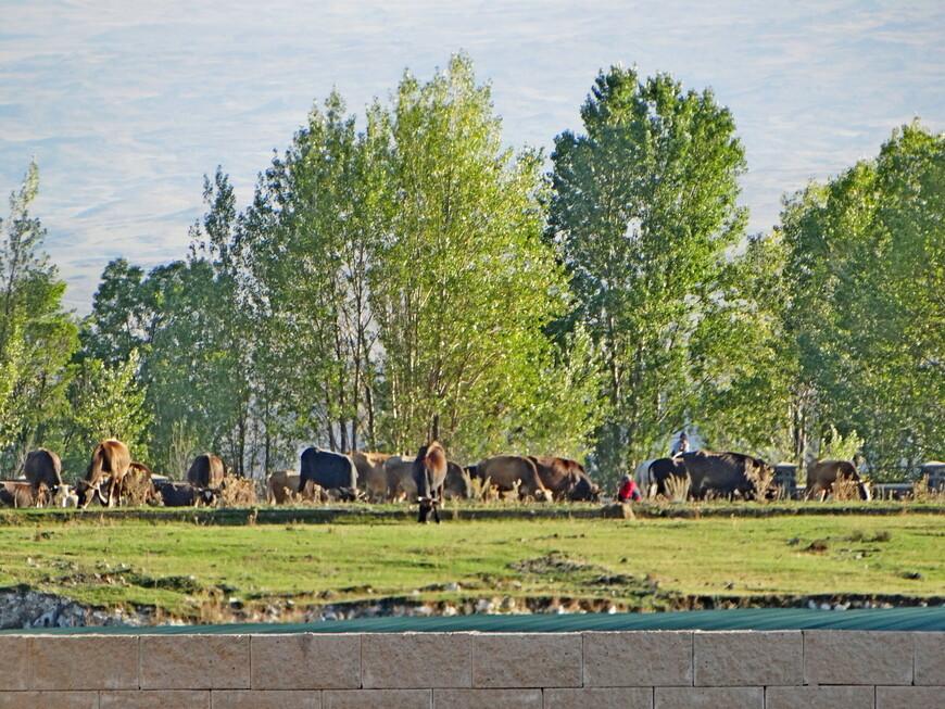 Ферма на окраине города Севан.