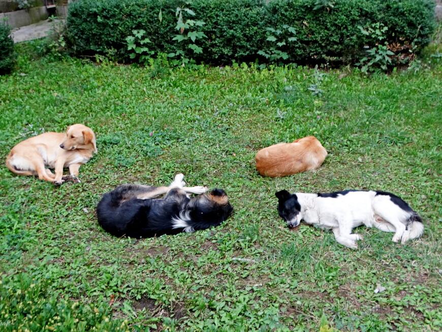 Газон у памятника облюбовали собаки. Им здесь тепло и уютно. Наверное, согревает аура доброй души Фрунзика.