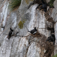 гнездовья балканов на скалах