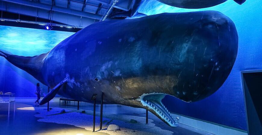 Музей китов в Исландии