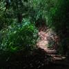 Тропа в джунглях