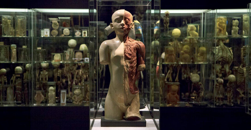 Музей Вролика