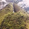 лес Синтры