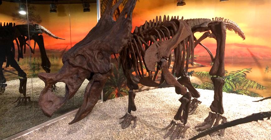 Палеонтологический музей Эльче