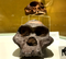 Черепа разных предков человека
