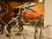 Скелеты хищных динозавров