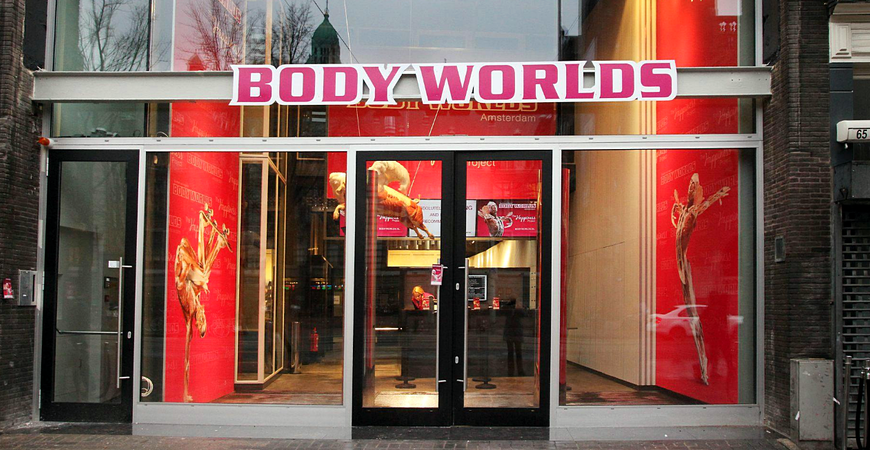 Музей человеческого тела «Body Worlds»