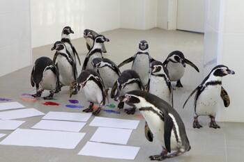 Пингвины в Приморском океанариуме научились рисовать