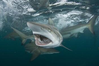 Акула напала на туристку на Сейшелах