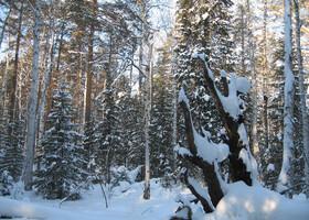 Причуды уральской зимы