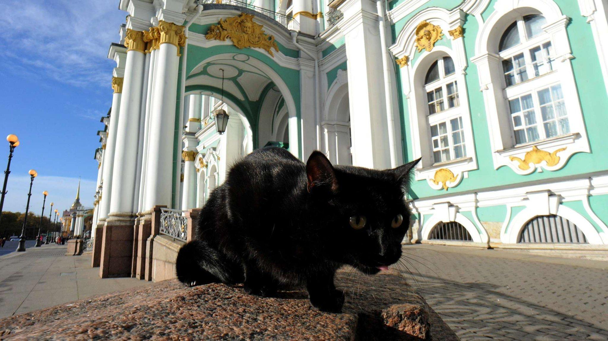 эрмитажный кот фото входит большое
