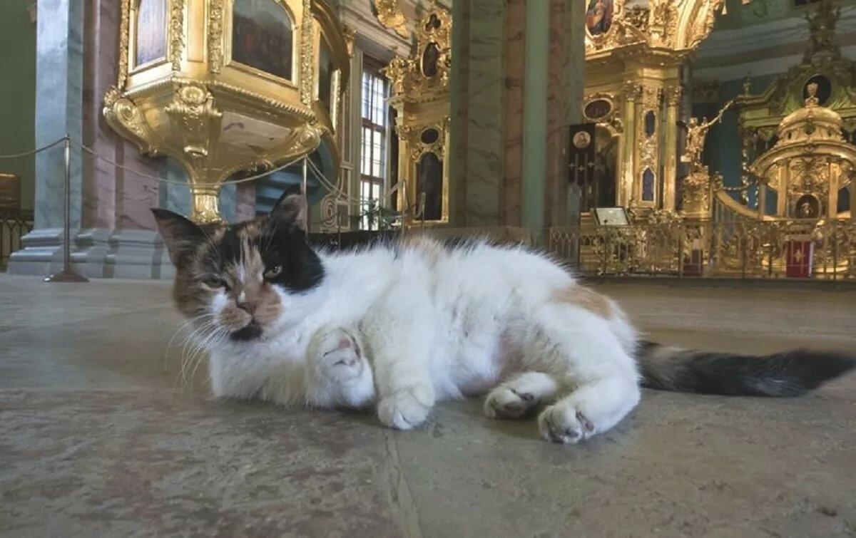проект этих кошки для эрмитажа картинки обивка салона, кресла