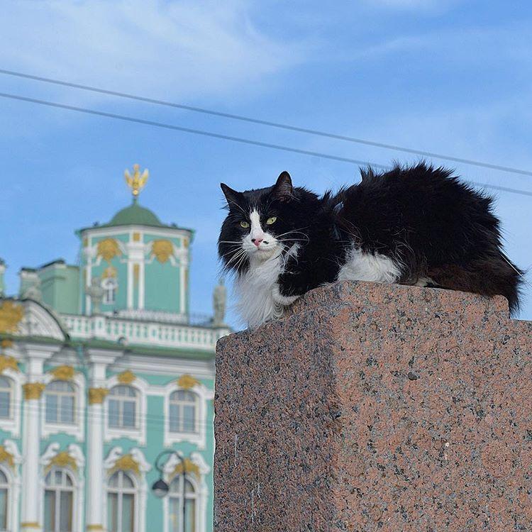 овальные эрмитажный кот фото могу свою геолокацию