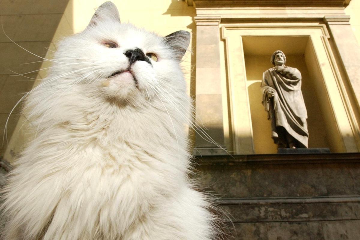 опыта кошки для эрмитажа картинки фото