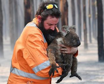 Более миллиарда животных погибли в пожарах в Австралии