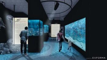В Черногории построят аквариум с морской фауной Средиземноморья