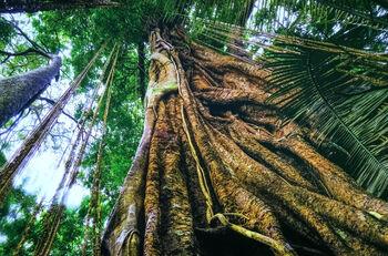 Заповедник мангрового дерева