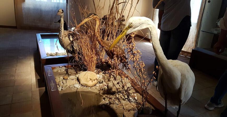 Музей фауны в природном парке «Неброди»