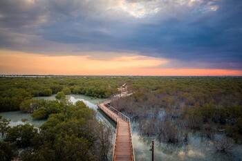 В Абу-Даби открылся мангровый парк