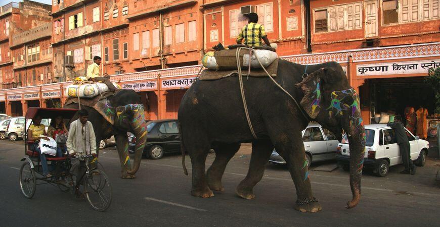 Фестиваль слонов в Джайпуре