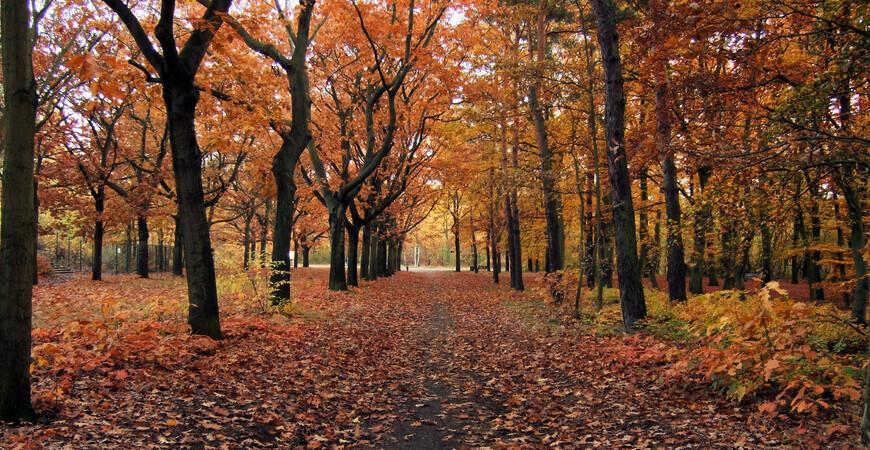 Парк Вульхайде