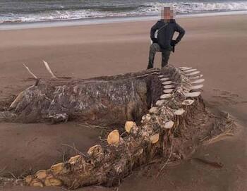 Скелет неизвестного животного вынесло на побережье Шотландии