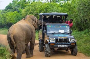 Слон напал на машину с туристами на Шри-Ланке