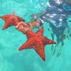 Морские звёзды натурального бассейна у острова Саона