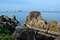 Скалы отделяют Перл Бич от соседнего пляжа Чай Чет