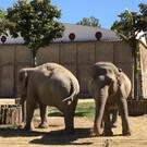 Зоопарк Неаполя