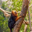 Зоопарк в Вильнюсе