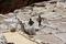 Местные жители собирают соль в мешки