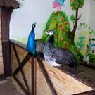 Зоопарк «Живая планета» в Тюмени