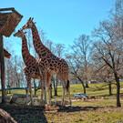 Зоопарк «Zoo Safari» в Помбии