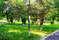Аптекарский сад в Тюмени