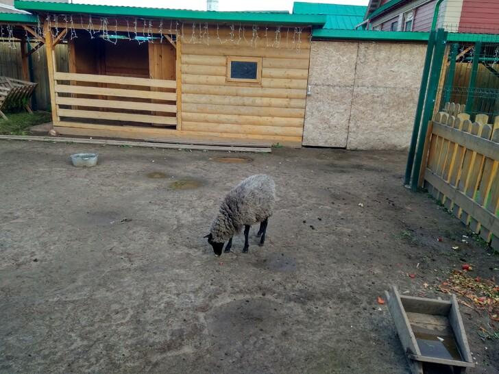 Контактный зоопарк в Старо-татарской слободе