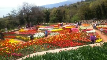Парад тюльпанов пройдёт в Крыму