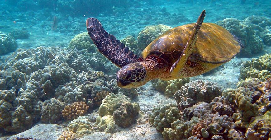 Национальный парк «Риф Пуэрто-Морелос»