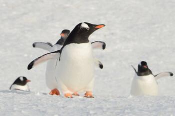 Антарктида — единственный континент без коронавируса