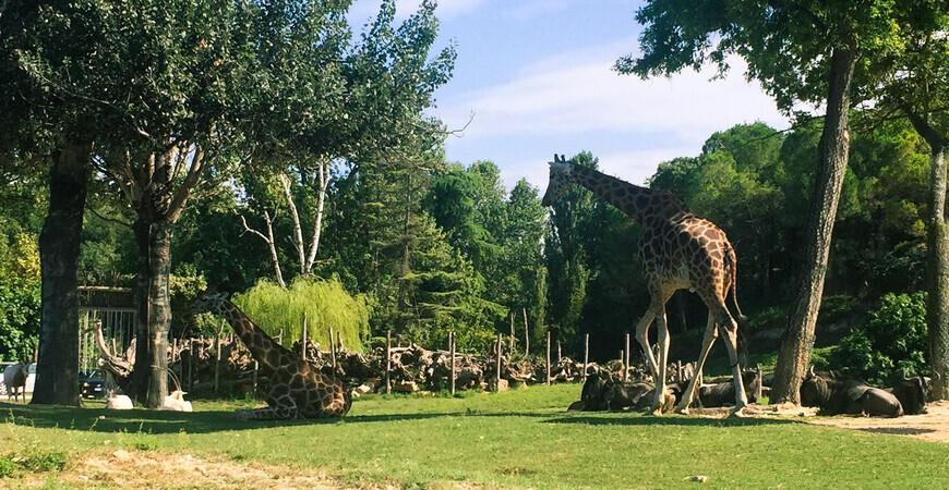 Парк Натура-Вива