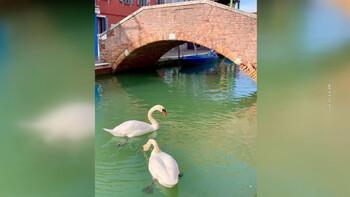 В безлюдной Венеции вода в каналах стала чистой