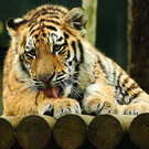 Зоопарк Santo Inacio