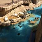 Зоопарк «Мундомар»