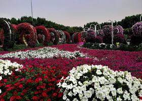 Сад чудес (Dubai Miracle Garden)
